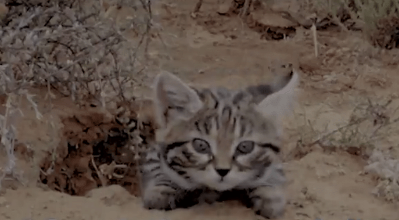 black footed cute Cats funny - 4536837