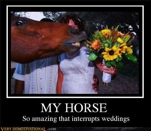 amazing horse weddings