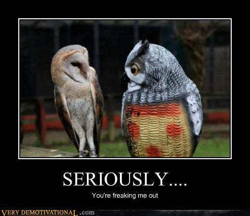 fake,freak out,owls