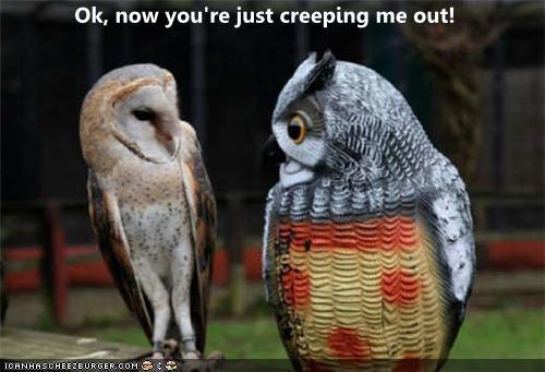 afraid caption captioned creep creepy freaked out now ok Owl shocked statue surprised
