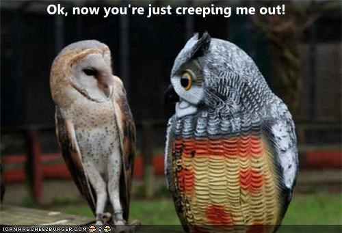 afraid caption captioned creep creepy freaked out now ok Owl shocked statue surprised - 4537695488