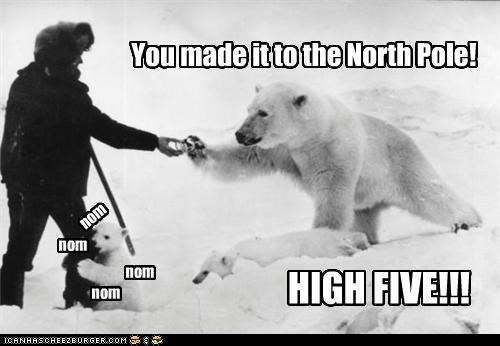 animal funny historic lols Photo polar bear