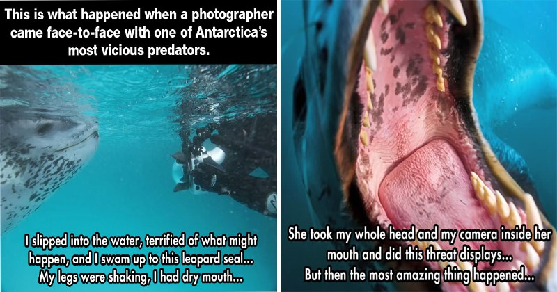 Amazing wildlife story about national geographic photographer and leopard seal.