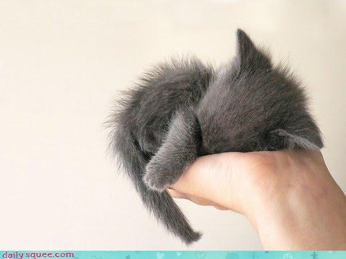 ball cat covered curled up face hiding itty bitty kitten sleeping squee - 4538179584