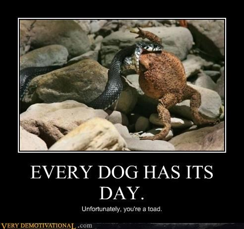 EVERY DOG HAS ITS DAY. Unfortunately, you're a toad.