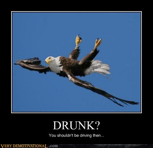 awesome bird drunk eagle - 4538710784