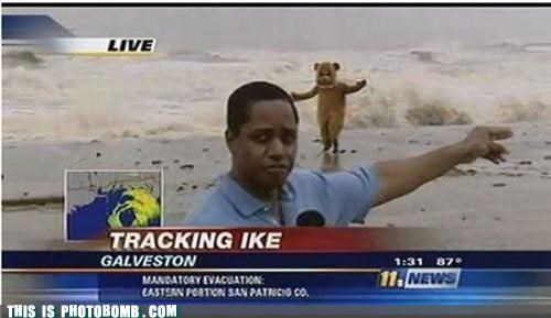 hurricane newscast pedobear photobomb