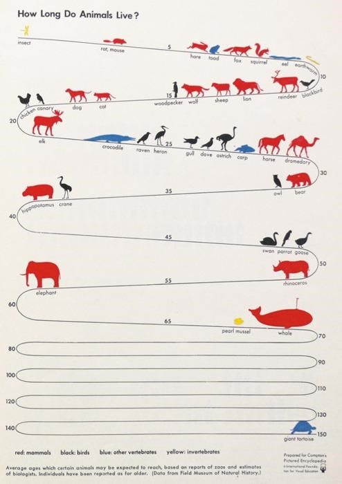 animals,infographic