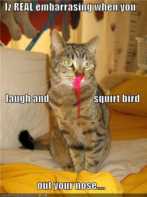 bird caption captioned cat embarrassed embarrassing feather Hall of Fame laughing nose squirting - 4538956544
