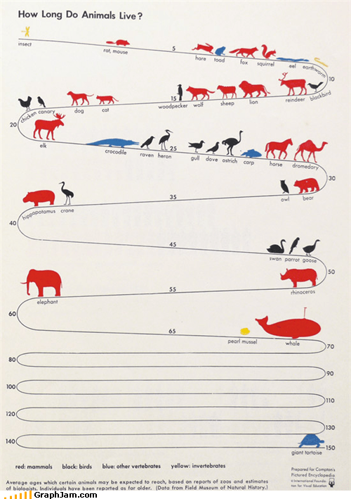 animals,humans are absent,infographic,lifespan,mammals,tortoise,whale