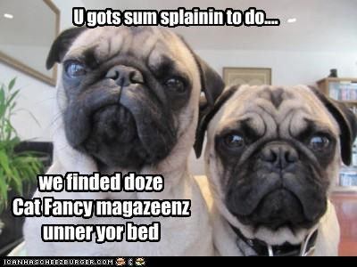 cat fancy demanding discovered explaining explanation found Hall of Fame hidden magazine magazines pug pugs - 4539632384