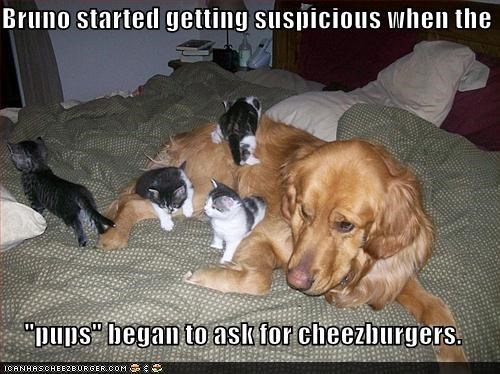 asking caption captioned cat Cats cheeseburgers confused dogs icanhascheezburger kitten suspicious - 4539760384