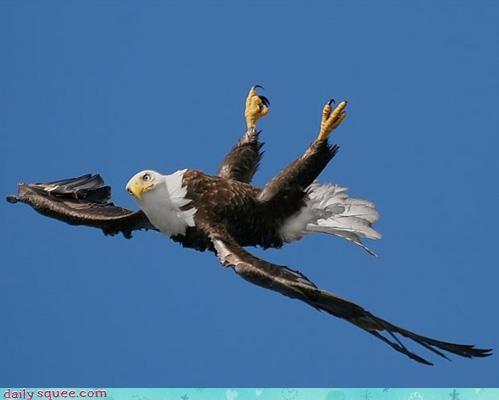 acting like animals arwing barrel roll eagle flying fox mccloud imagination pretending starfox - 4539800576