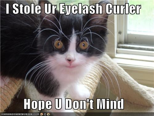caption captioned cat curler dont-mind eyelash Hall of Fame hope kitten stole