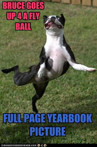 FULL PAGE YEARBOOK PICTURE BRUCE GOES UP 4 A FLY BALL