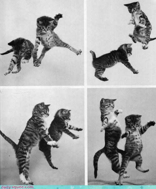 cat Cats dance dancing instruction kitten lessons moves panel tabby - 4539916288