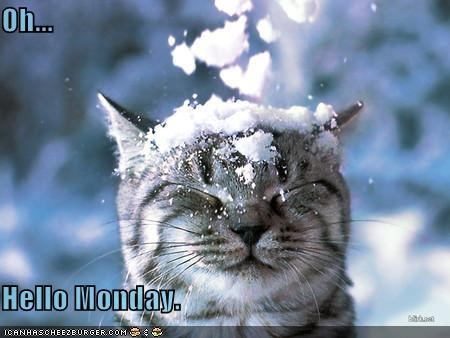 caption captioned cat do not want Hall of Fame hello monday sarcasm snow snowball - 4539928576