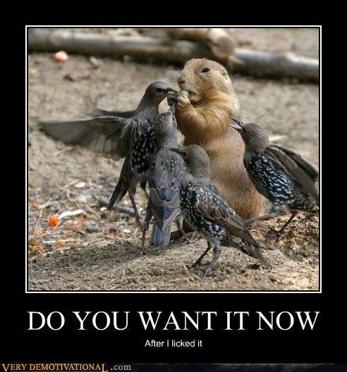 birds food nut squirrel - 4540271616