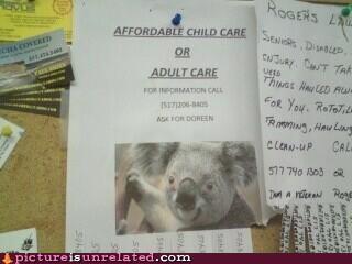 advertisement baby sitter koalas marsupials wtf - 4540538112