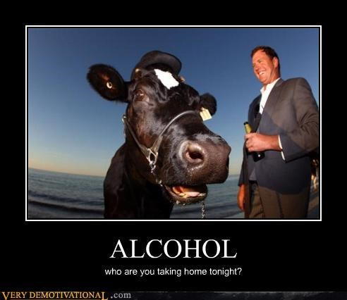 alcohol,cow,horse love,sexy times