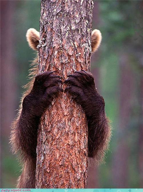 bear cuddly do want hide and seek hiding nap Pillow request seeking - 4541617152