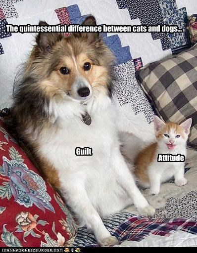 The quintessential difference between cats and dogs... Guilt Attitude