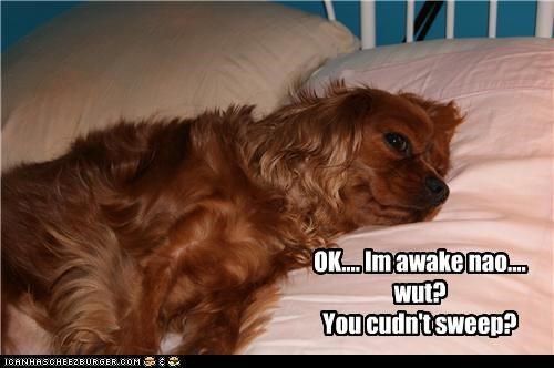 annoyed awake cocker spaniel Okay question sleeping upset waking up - 4541877504