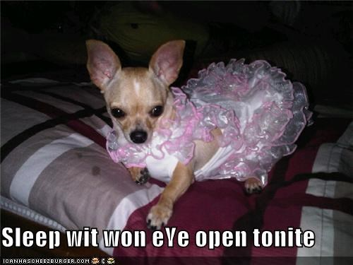 chihuahua,costume,do not want,dress,eye,one,open,sleep,threat,upset,warning