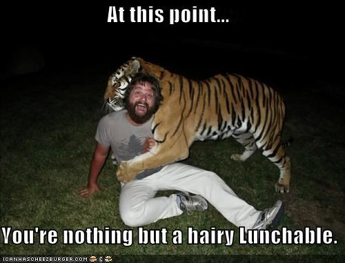 actor celeb funny Zach Galifianakis - 4542653696