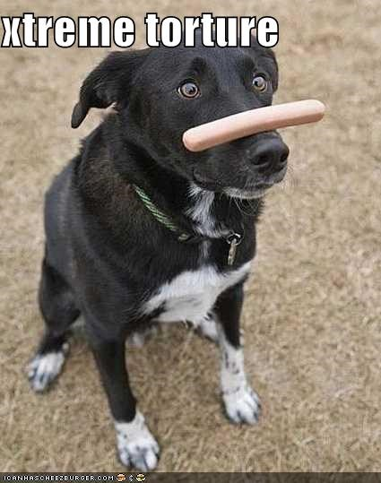 balancing,border collie,cruel,do want,extreme,hotdog,nose,torture