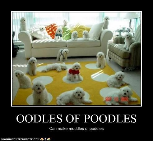 OODLES OF POODLES Can make muddles of puddles