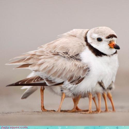bird birds chicks doing it wrong FAIL nesting wrong - 4542997248