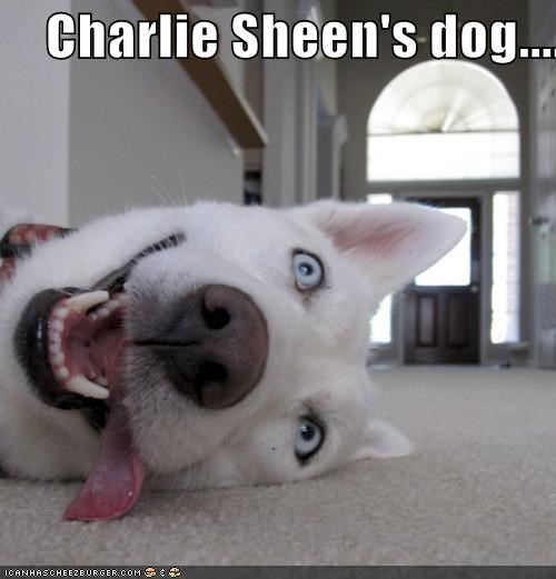 Charlie Sheen's dog....