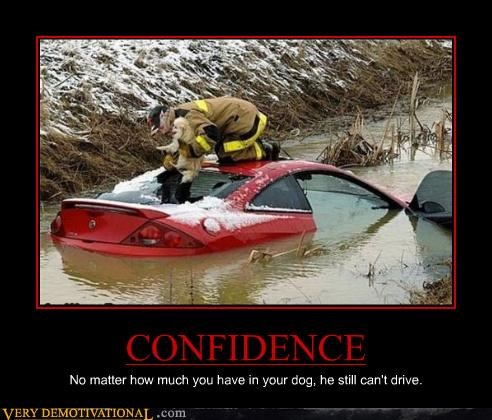 car confidence dogs sad face - 4543393024