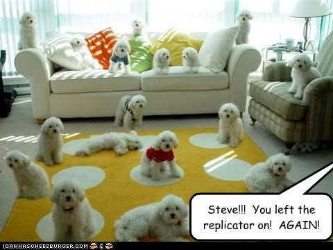 accident again copies many mistake poodle poodles replication replicator