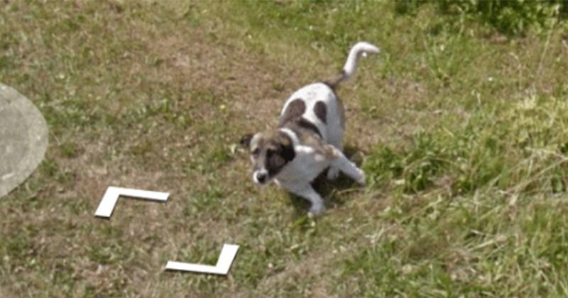 google fotografia perro