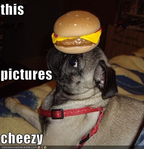 Cheezburger Image 4544542464