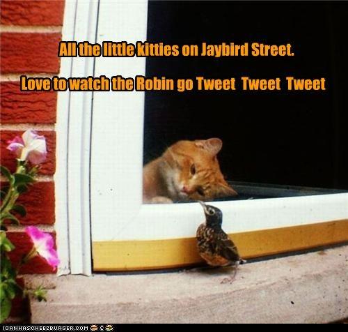 All the little kitties on Jaybird Street. Love to watch the Robin go Tweet Tweet Tweet