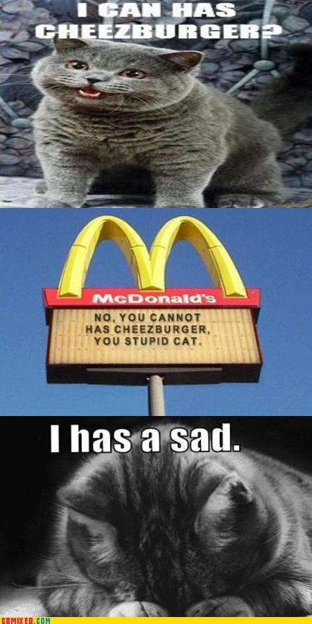 Caturday,happy cat,I Can Has Cheezburger,McDonald's,Sad,sad but true