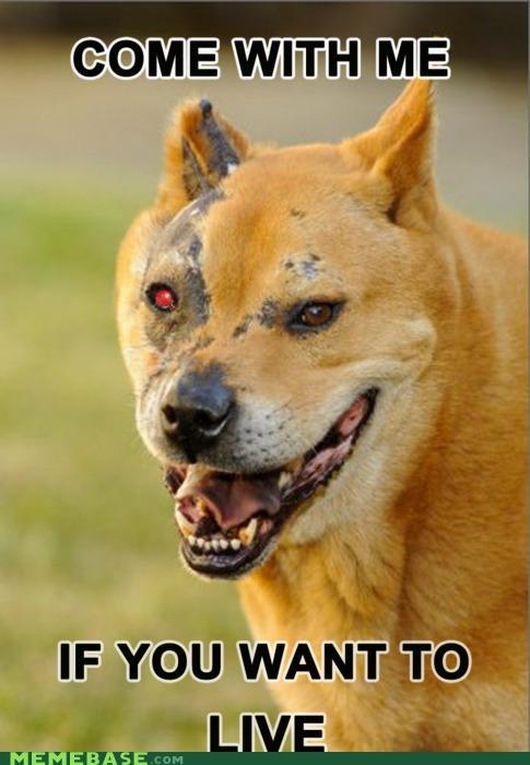 animemes Arnold Schwarzenegger dogs terminator - 4544999936