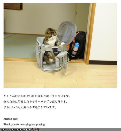 aww best of the week earthquake Japan maru news sweet Tsunami - 4545068288