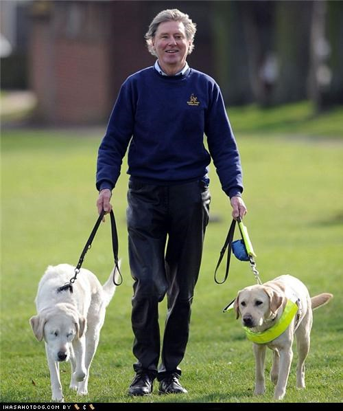 amazing blind guide Hall of Fame heartwarming labrador service service dog touching - 4545211648