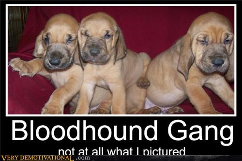 bloodhound gang,dogs,Music