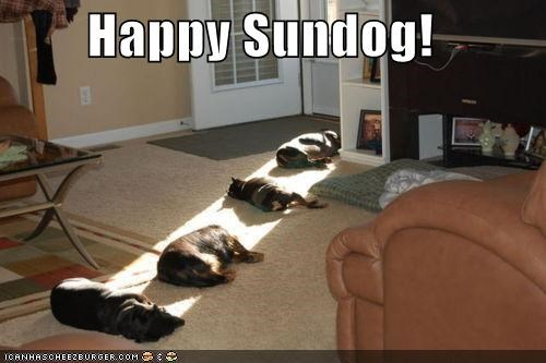 boxer,four,Hall of Fame,happy,happy sundog,labrador,laying,sleeping,sun,sunbeam,Sundog,whatbreed