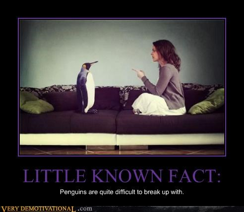 LITTLE KNOWN FACT: Penguins are quite difficult to break up with.