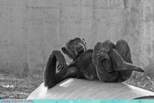 acting like animals ego glamor gpoy monkey photo shoot posing self-obsessed - 4546613248
