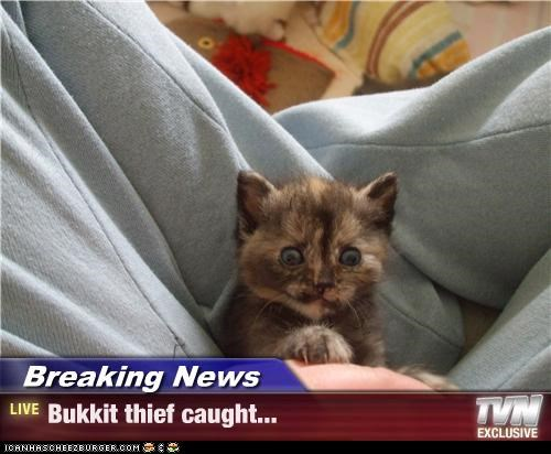 Breaking News - Bukkit thief caught...