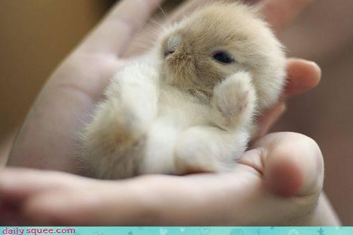 baby Bunday bunny happy happy bunday rabbit - 4546640896