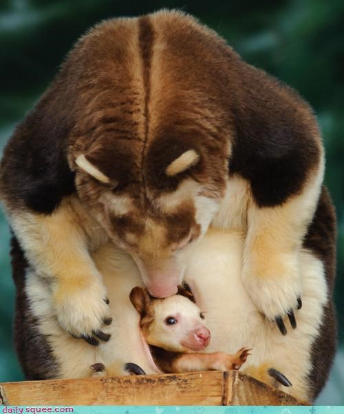 baby,mother,peekaboo,surprised,tree kangaroo