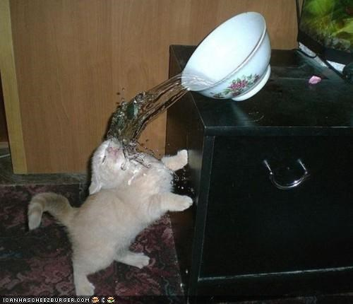 bad luck,bowl,cyoot kitteh of teh day,FAIL,oops,pwned,water